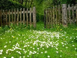 March spring garden image