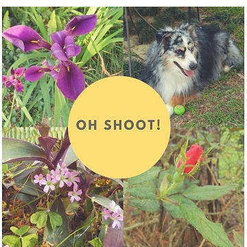 Oh Shoot Volume 2 by Sharon @ Ms P Designs USA