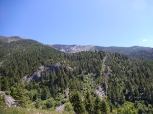 Middle Cottonwood Hike July 2019 by Sharon @ Ms P Designs USA