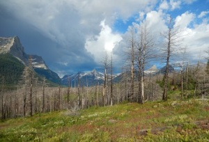 St. Mary Falls Trailhead in GNP July 2019 by Sharon @ Ms P Designs USA