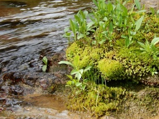 Water plants Virginia Creek GNP July 2019 by Sharon @ Ms P Designs USA