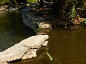 Ducks at Riverwalk San Antonio by Sharon @ Ms P Designs USA
