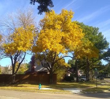 Beautiful Autumn Oaks by Sharon @ Ms P Designs USA