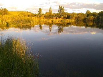 Pond at Story Mill Park Montana by Sharon @ Ms P Designs USA