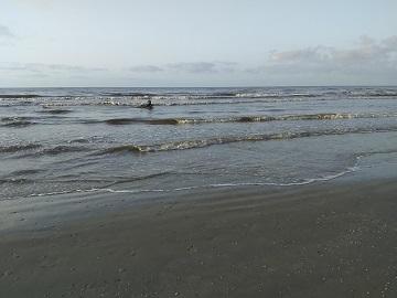 Morning Surf Galveston by Sharon @ Ms P Designs USA